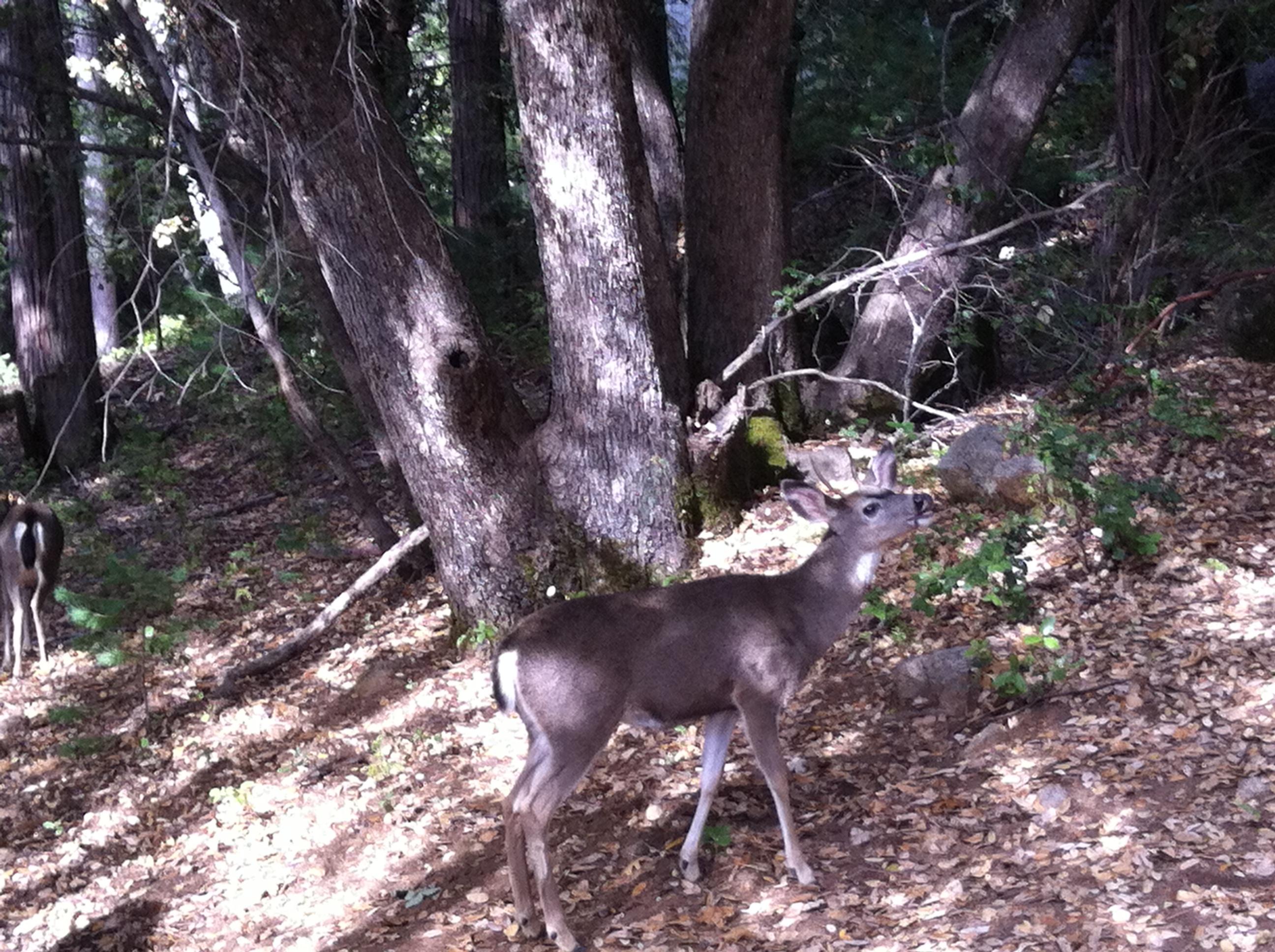 deer-018