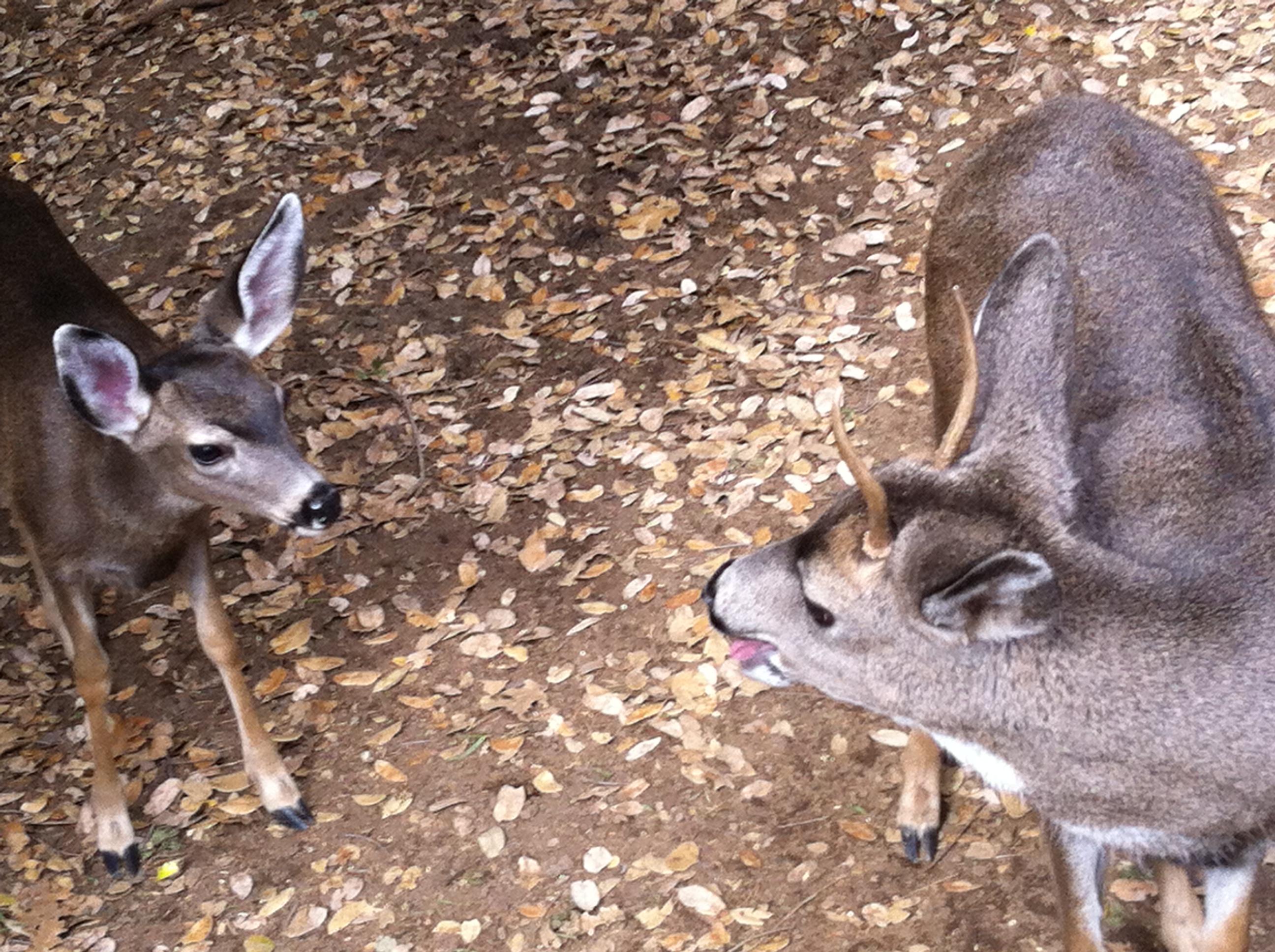 deer-053