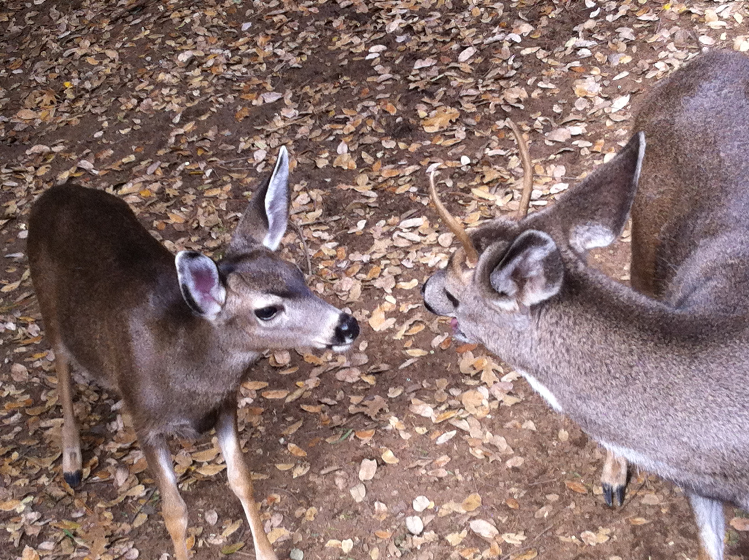 deer-057