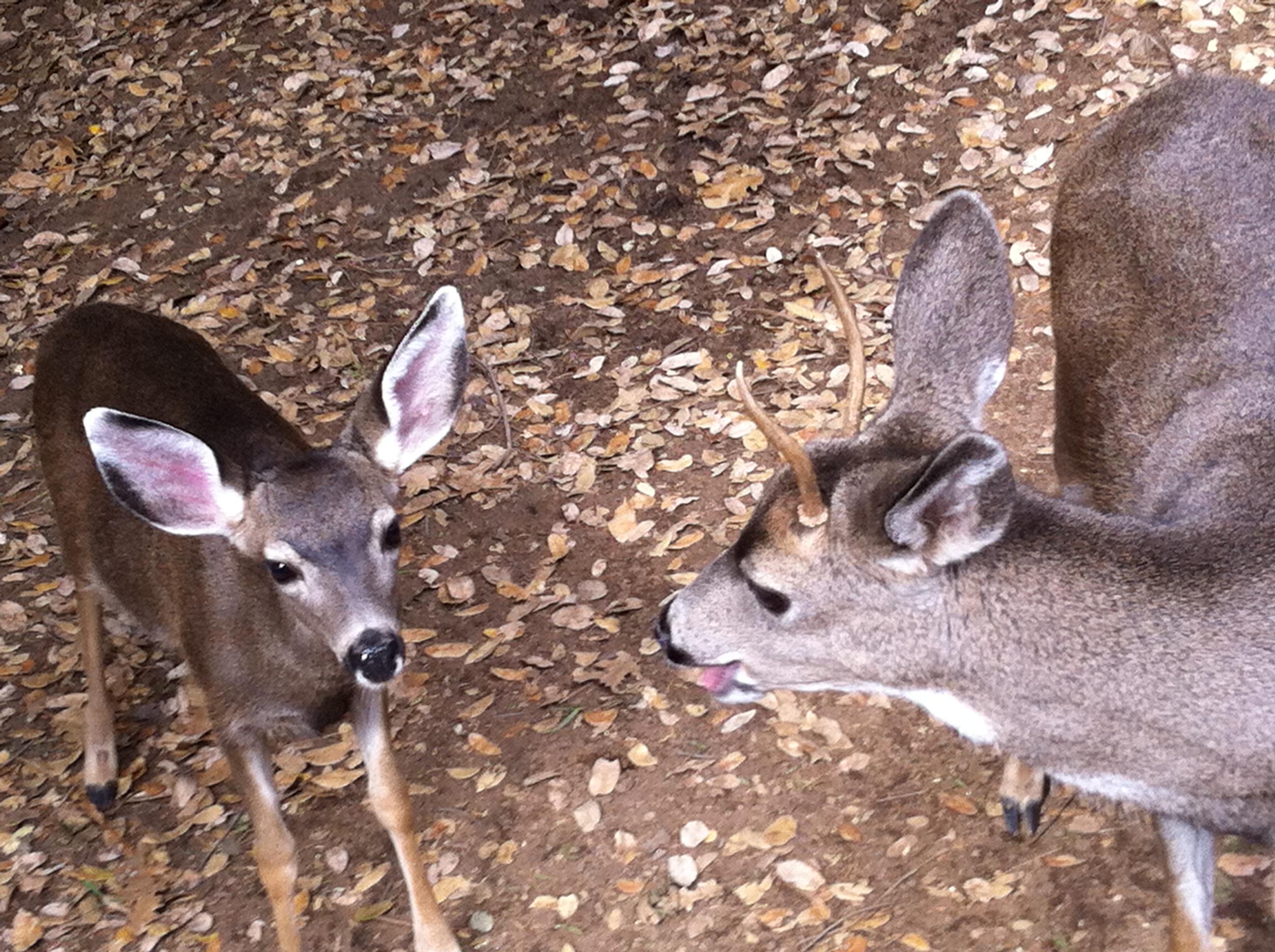 deer-058