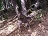 deer-022