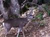 deer-024