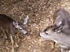deer-054