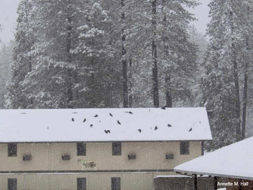 Birds Congregate on Wildwood Inn