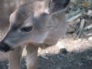 Deer 025